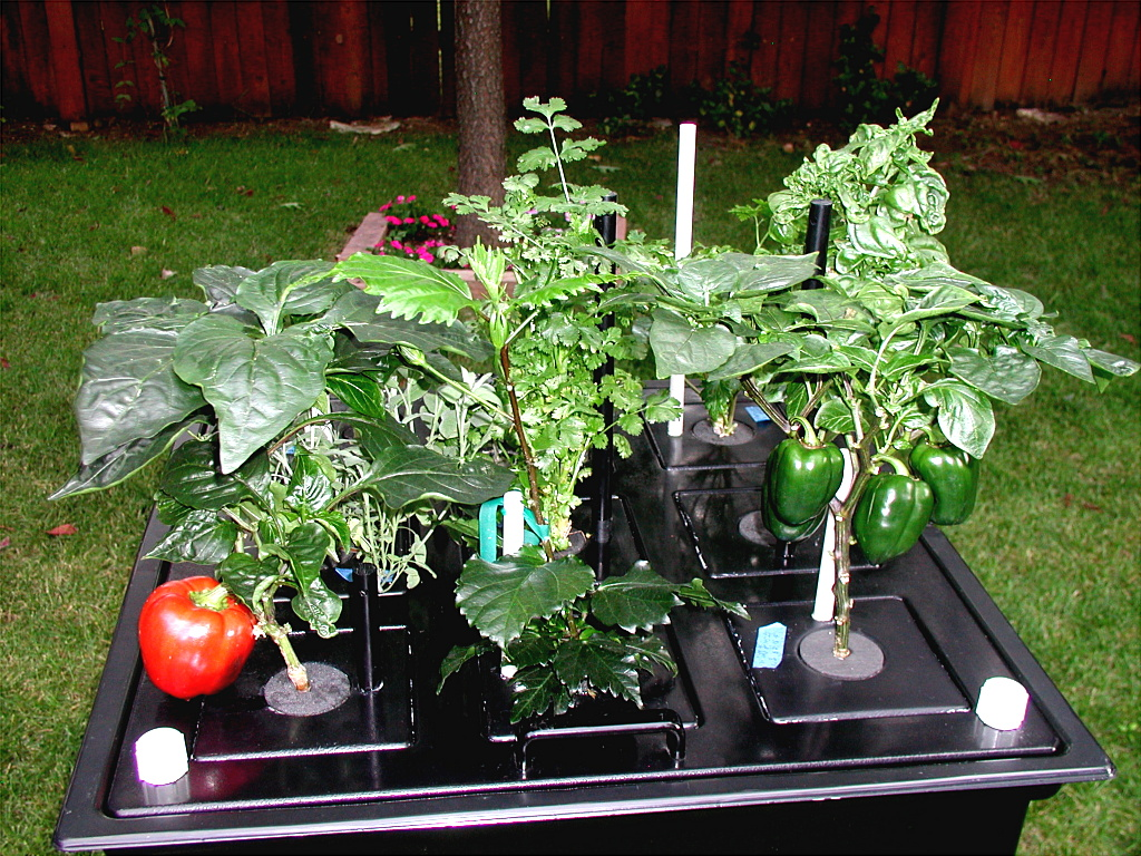 Aeroponics not Hydroponics - Growing Healthy Organic Plants
